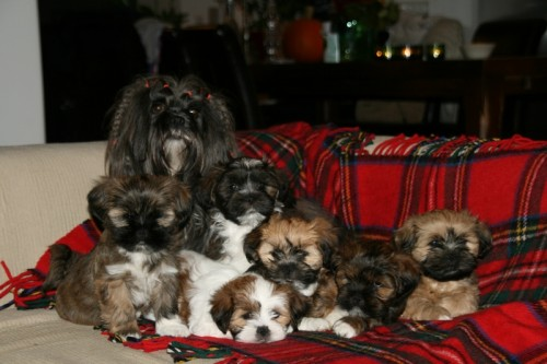 Chic Choix Ginger babies 7,5 weeks goodbye