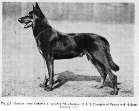 Saksanpaimenkoira 1912