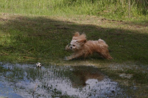Elviira vedessä