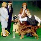 Messarin ikonisen kansainvälisen koiranäyttelyn aika – vaikka liika on liikaa