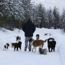 Kesä on pohjoismaiselle koiralle erittäin tärkeää