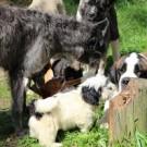 Koiralla sairaalloinen ruokahaluttomuus on vakava asia