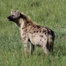 Are you a hobby hyena – how to recognize one?