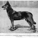 Koiranjalostus sana pitäisi monissa roduissa pohtia uudelleen – palautus