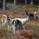 Leikkimielinen sanakirja koirien kanssa harrastamisen maailmaan