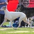 Terve vatsan toiminta ja ruuansulatus ensiarvoisen tärkeää koiranjalostuksessa