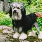 How to study your breed?